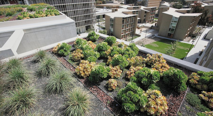 DT Green Roof