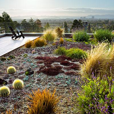 DT Rooftop Garden